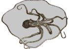 awesome octopus coffee table with tempered glass
