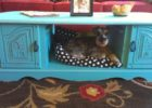 blue coffee table dog bed with drawer