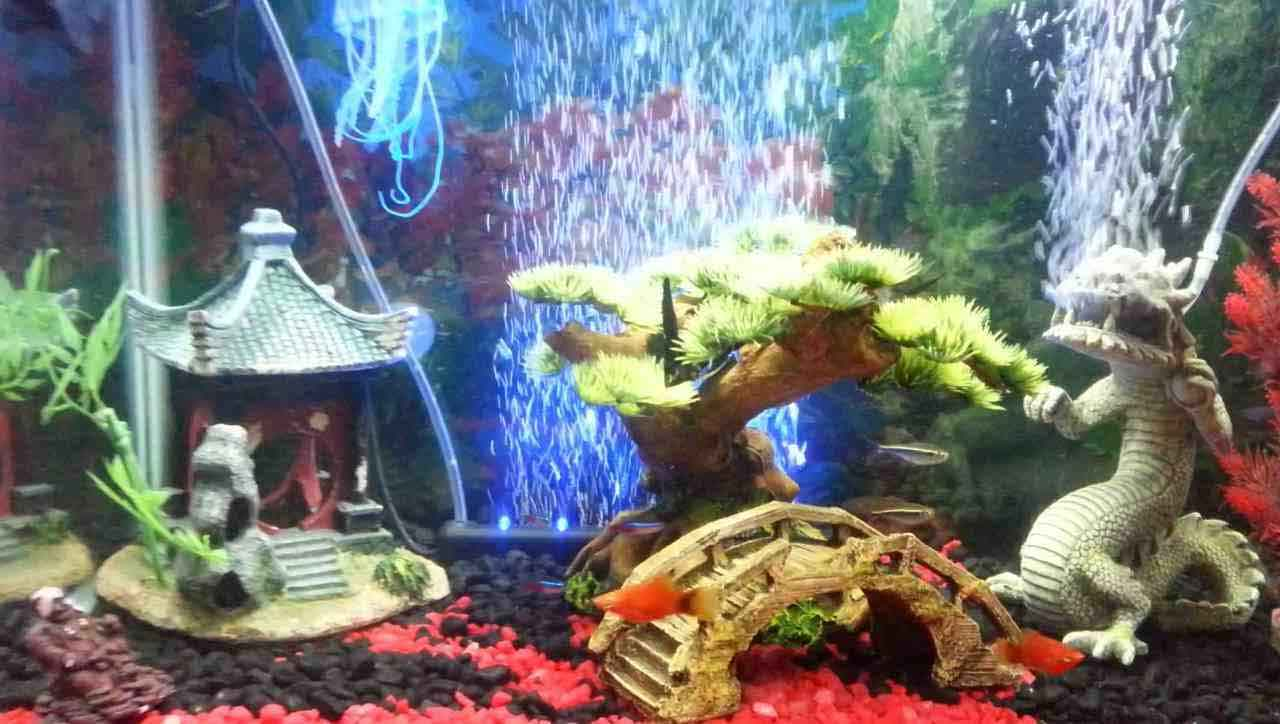 Authentic Asian Themed Fish Tank Decorations Ideas For Any Type Of Aquarium