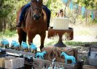 horse racing party food horse riding birthday party Rustic Horse Birthday Party Ideas